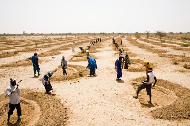 Farming in Niger